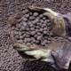 iron ore pellets Galerry